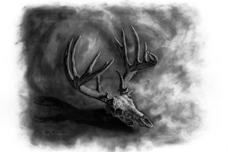 Whitetail Deer Skull