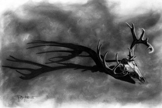 Whitetail Deer Study