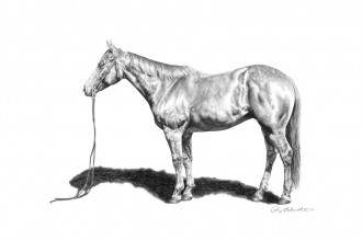 Study Of A Mare